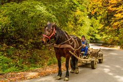 Secaria, Romania - October 10, 2015: Unknown young man steering a one-horse carriage Royalty Free Stock Photography
