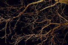 secas ramas Стоковое Изображение RF