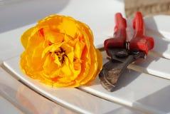 Secateurs и тюльпан померанца отрезока Стоковое Изображение
