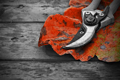 Secateurs and autumn leaf on rustic wooden table Royalty Free Stock Image