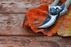 Secateurs and autumn leaf on rustic wooden table Stock Photography