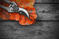 Secateurs and autumn leaf on rustic wooden table Royalty Free Stock Photos