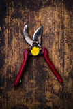 Secateurs and dandelion. Farm life style. Secateurs and dandelion Royalty Free Stock Photos