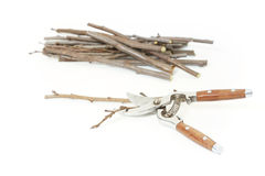 Secateurs with fruit twigs on white Stock Images