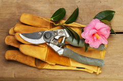 Secateurs gloves and camellia Stock Photography