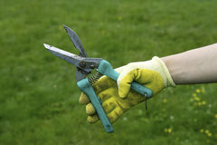 Secateurs in the hand Stock Photo