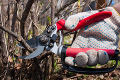 Secateurs in hand Stock Image
