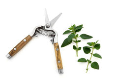 Secateurs and Marjoram Herb Stock Photography