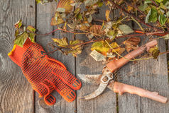 Secateurs and raspberry stems on a wooden table Royalty Free Stock Photos