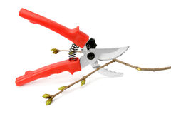 Secateurs. A secateurs  on white background Royalty Free Stock Image