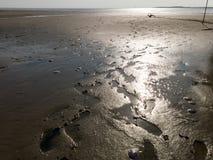 Secche scoperte a bassa marea del mare di Wadden delle zone umide, Paesi Bassi Immagine Stock Libera da Diritti