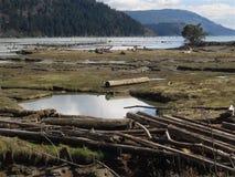 Secche scoperte a bassa marea dell'estuario fotografia stock