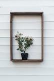 Secchio con la pianta sullo scaffale Fotografia Stock Libera da Diritti