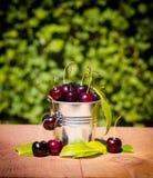 Secchio con le ciliege fresche e succose fotografia stock libera da diritti