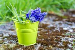 Secchio del fiore di Grren, Lussemburgo Fotografia Stock Libera da Diritti