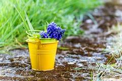 Secchio del fiore di Grren, Lussemburgo Fotografie Stock Libere da Diritti
