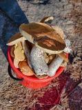 Secchio della raccoglitrice del fungo Fotografie Stock Libere da Diritti