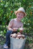 Secchio della tenuta del ragazzo delle patate Fotografie Stock Libere da Diritti