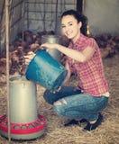 Secchio della tenuta della lavoratrice agricola con il foraggio del pollo in pollaio Immagini Stock