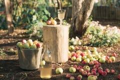 Secchio delle mele e una bottiglia del succo di mele organico in un giardino Fotografie Stock