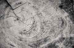 Sección blanco y negro de un tocón de árbol del corte Imagen de archivo libre de regalías