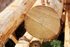 Sección de madera Imagen de archivo libre de regalías