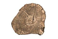 Sección del corte de la madera Fotografía de archivo libre de regalías