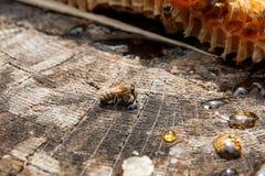 Sección del panal de la cera de la colmena en la parte posterior de madera del vintage Fotos de archivo