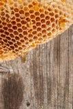Sección del panal de la cera de la colmena en la parte posterior de madera del vintage Foto de archivo
