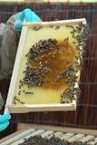 Sección del panal de la colmena de la abeja Fotos de archivo