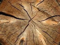 Sección del registro del árbol Imagen de archivo libre de regalías