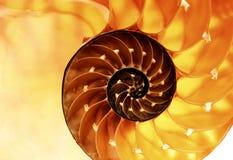 Sección del shell del nautilus Fotos de archivo