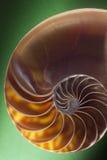 Sección espiral del shell del nautilus Imagen de archivo