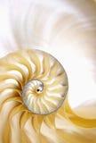 Sección espiral del shell del nautilus Fotografía de archivo