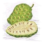 Sección representativa de la fruta de Noni Imagenes de archivo