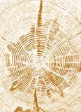 Sección representativa del tocón de árbol Fotos de archivo
