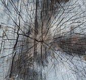 Sección representativa del tronco de árbol Imágenes de archivo libres de regalías