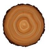 Sección representativa del tronco de árbol foto de archivo libre de regalías