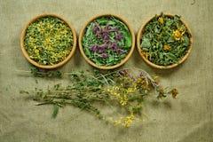 secco Medicina di erbe, erbe medicinali di fitoterapia Fotografia Stock