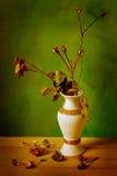 Secco sulla rosa di giallo Fotografia Stock Libera da Diritti