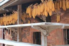 Sechage du maïs, Collonges-Ла-румян (Франция) стоковые фотографии rf