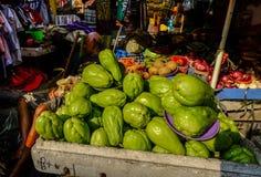 Sechium edule fresco delle zucchine centenarie immagini stock
