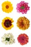 Sechs Blumen Lizenzfreies Stockbild