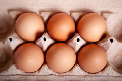 Sechs braunes Ei in einem Behälter Lizenzfreies Stockfoto