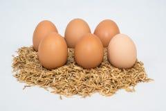 Sechs Eier mit Hülsen Stockfotografie