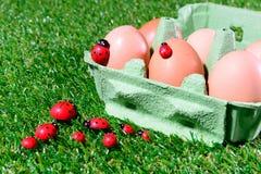 Sechs frische Eier in einem Kasten Stockbilder
