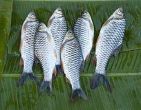 Sechs frische Flussfische Lizenzfreies Stockfoto