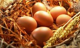 Sechs gelbe Eier Stockfotos