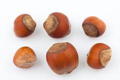 Sechs Haselnüße getrennt auf weißem Hintergrund Stockfotos