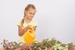 Sechs Jährigmädchen, das für eingemachte Blumen sich interessiert Stockfotos